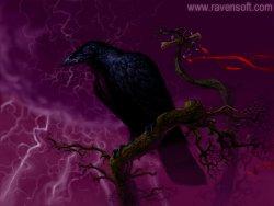 Raven wallpaper